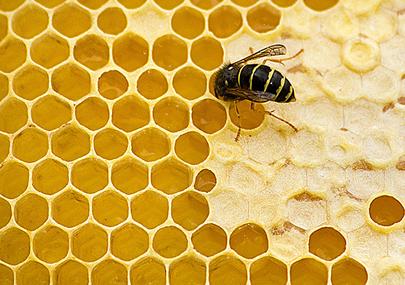 La Saponaria cera d'api vergine biologica 100g
