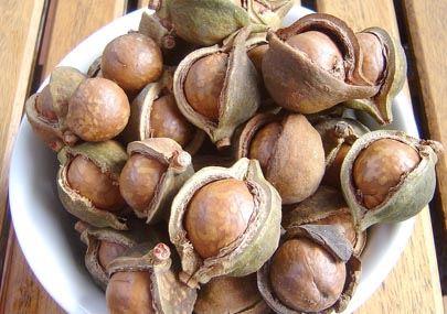 LaSaponaria olio di macadamia 100ml